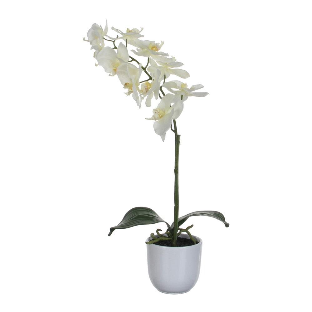 Sier Orchidee Phalaenopsis groen wit 60cm hoog