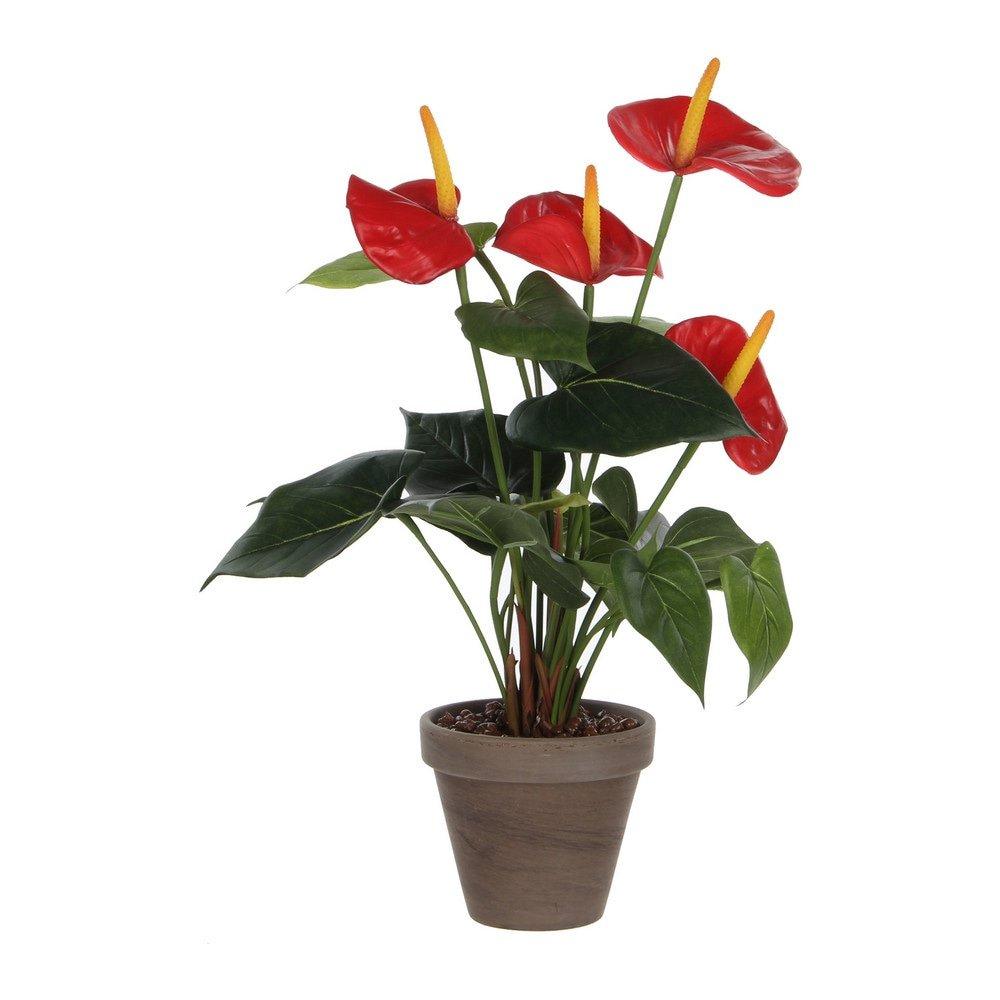 Sier Anthurium met pot 40cm hoog