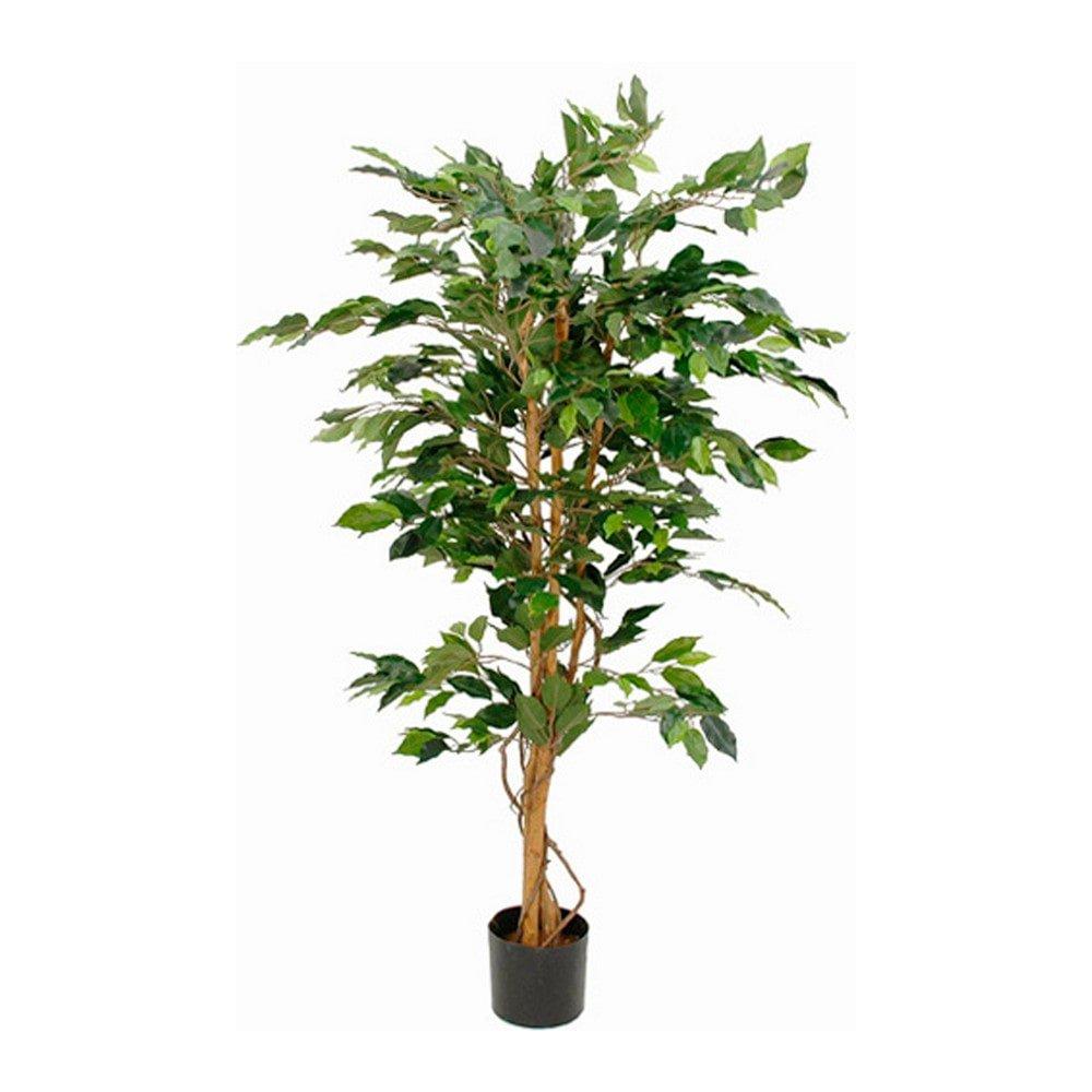 Sier Ficus Benjamina 150cm (exclusief pot)