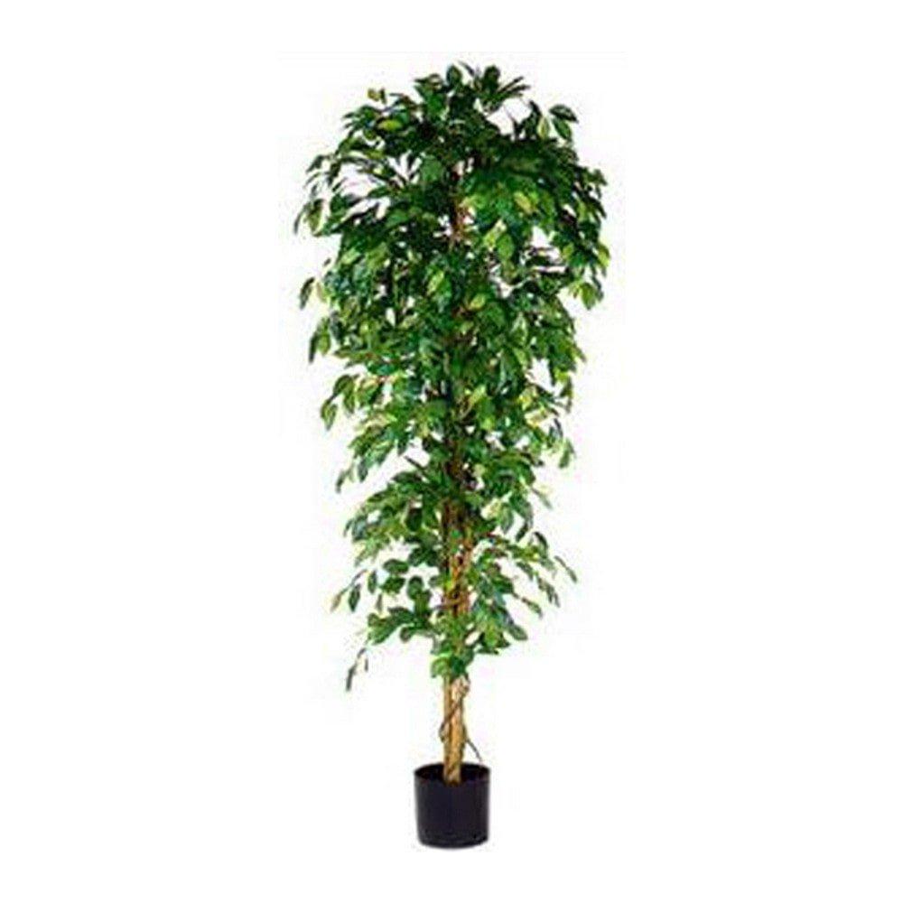Sier Ficus Benjamina 210cm (exclusief pot)