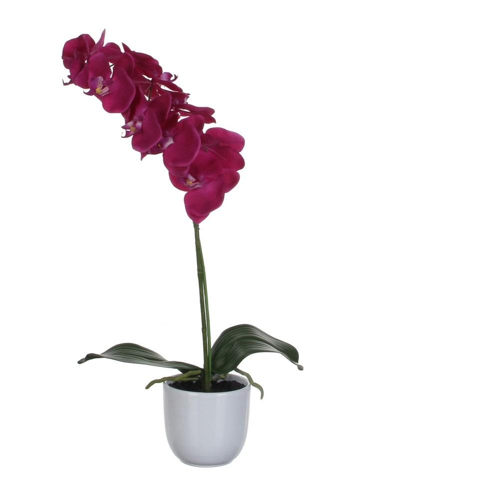 Sier Orchidee Phalaenopsis groen paars 60cm hoog