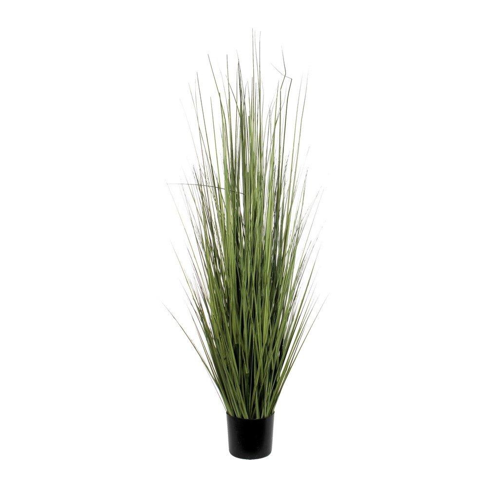 Sier Gras groen 153cm hoogte